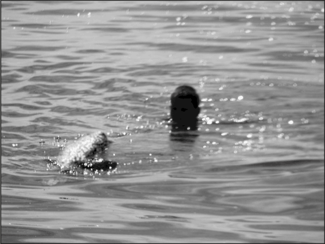A swimmer encountering something Saugie-like in the waters near Southampton